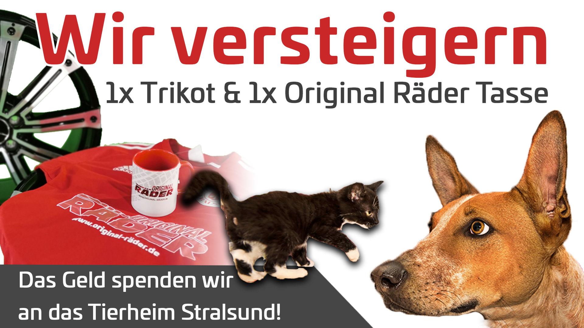Versteigerung für das Tierheim Stralsund